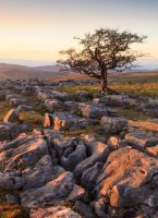 Malham tree by namwen26