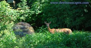 Dry Stone Slate Sphere with Deer by Devine-Escapes