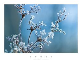 Frozen Flowers by Stridsberg
