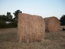 Halloween Hay bales by adivawoman