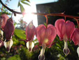 Bleeding Heart by MorriganLung