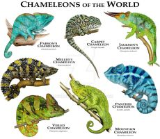 Chameleons of the World by rogerdhall