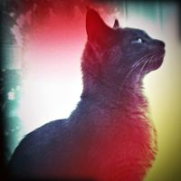 Holga Print 7 - Flo the Cat by uselessdesires