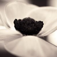Anemone by Aiae