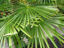 Can we be fronds? by Regenstock