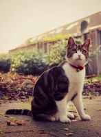 The staring cat by ManaGesi