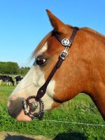 One Ear Bridle - Lodewijk by Niarbon