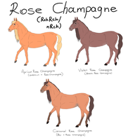 Rose Champagne- Basic Information by Aspen-Isles-Stable