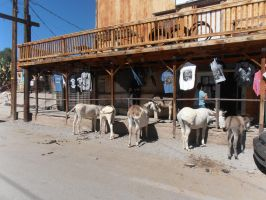 Oatman, Arizona, USA by SweediesArt