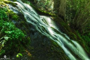 The Mossy Slide by mjohanson