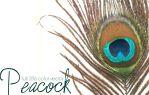 Peacock Feather - Vector by youstolemysoul2