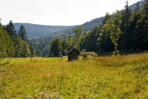 Black Forest6 by archaeopteryx-stocks