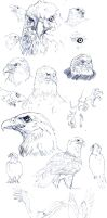 :study: bald eagle by ufficiosulretro