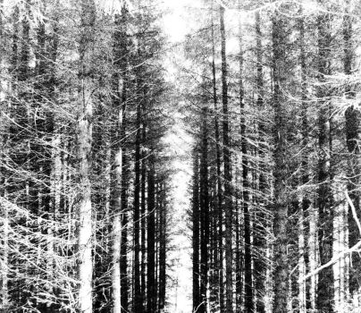 Greyscale Forest by PENTPIMTTS