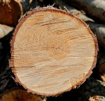 Wood End Texture - 8 by AGF81