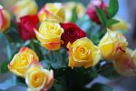 Yellow roses by clippercarrillo