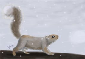 Winter Squirrel Card by soyrwoo