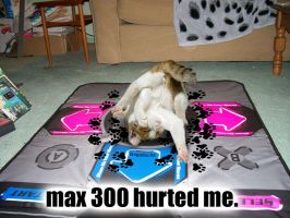 DDR plus CAT equals LOL by Negaduck9