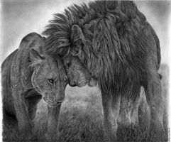 lions by Bengtern