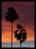 Pink Orange Palms by Mayanita