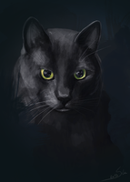 Dark cat by Sintija