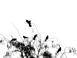 The Crow's Silhouette by Iguanition