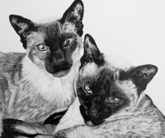 Siamese Cats by InjectVibrancy