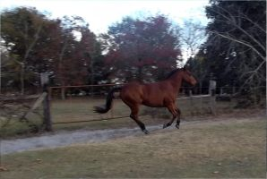 Horse cantering by LazyHcustomtack
