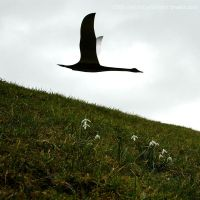 Snowdrop Flypast by EarthHart