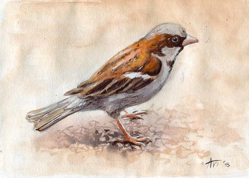 A sparrow by Leffsha