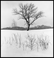 Winter tree, black and white.img670 1 by harrietsfriend
