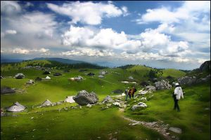 Slovenian Alpine meadow by Ciril