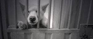 Behind bars III by MessiMutt