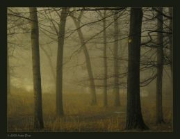 foggy night v1 by adras