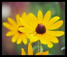 Soft and Sweet_yellow by ccangel33
