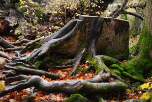 Tangled Roots by alanhay