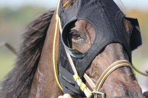 Eyes of a Racehorse by LaurieSalzler