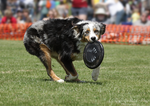 Aussies Love Their Frisbees by Deliquesce-Flux