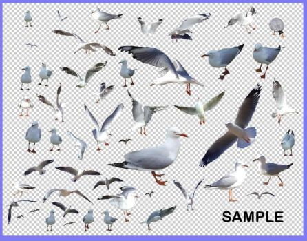Seagull Pack 1 - HB593200 by hb593200