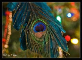 Eyes on Christmas by tleach0608