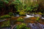 Toorongo River 5 by Bjay70