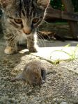 cat and mouse by natasha-marie