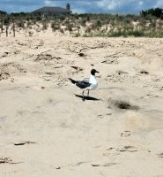Seagull by like-a-seahorse