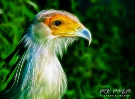 Exotic Bird: Fractalius Re-Edit by nerdboy69