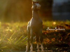 As The Sun Sets by BamaBelle2012
