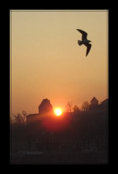 sunset with a seagull by GreenSerenity
