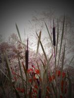 NATURAL CANVAS ( VIGNETTE ) by ANDYBURGESS