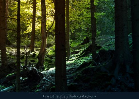 Magic Forest 03 by kuschelirmel-stock
