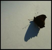 the last butterfly by diana-irimie