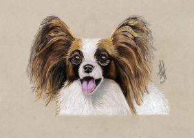 Papillon by lonely-wolf-22